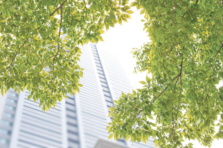 Grüne Zweige vor einem Büro-Hochhaus verdeutlichen den Zusammenhang zwischen Ökonomie und Ökologie.